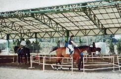 体験乗馬屋根付馬場