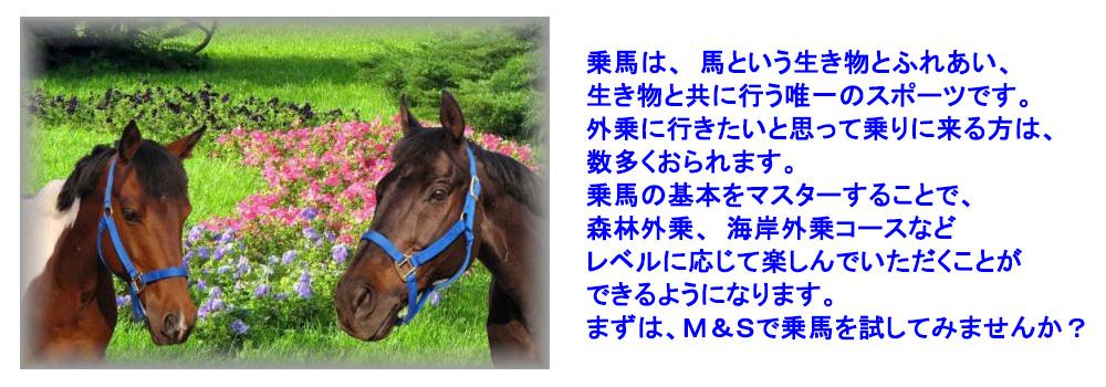 M&S乗馬クラブ、東近江